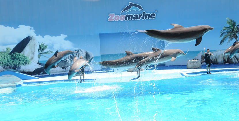 Things to do in the Algarve - Zoomarine