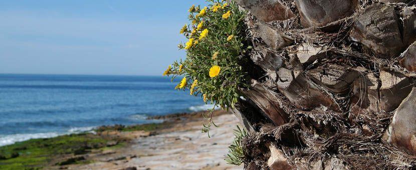 Porto 3 day itinerary - Praia da Luz beach