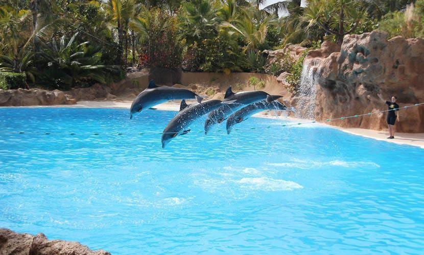Spanish islands comparison - Tenerife