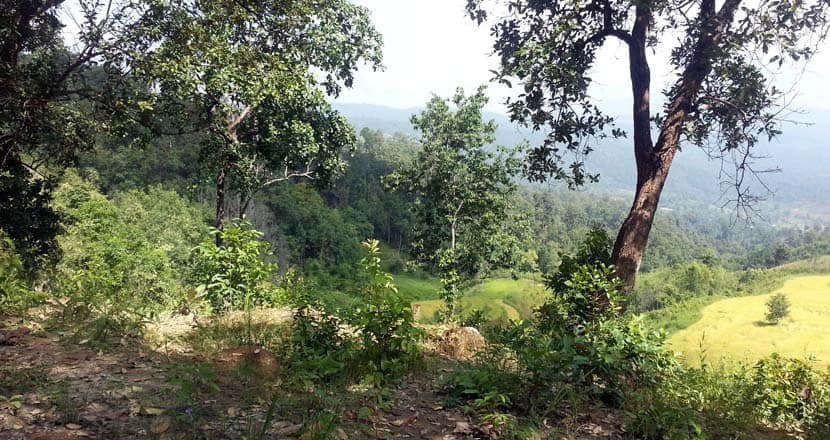 Best things to do in Thailand - Chiang Mai jungle