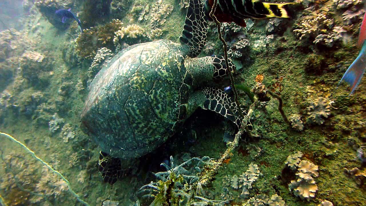 Ko Tao scuba diving - Best islands in Thailand