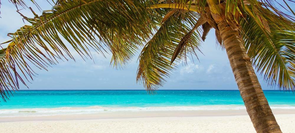 Holiday booking tips - Shows a beach with palm tree