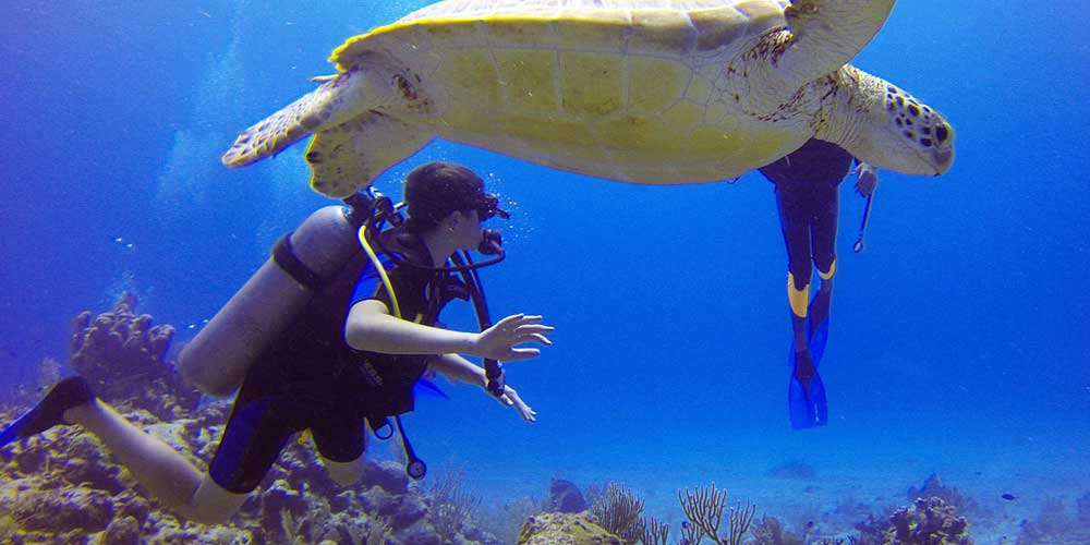Cheapest way to book a holiday - Shows Scuba divers and a turtle