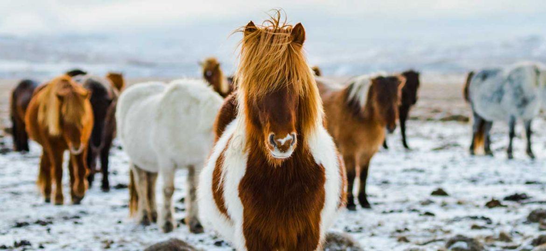 Iceland inspiration - reasons to visit Iceland