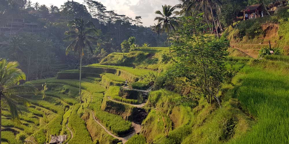 Bali - amazing scenery and views