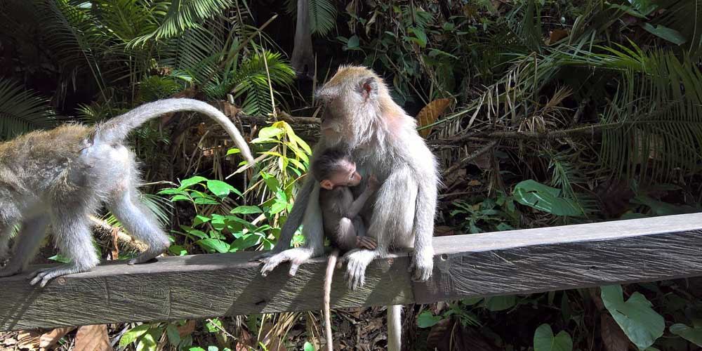 Bali monkey forest meeting