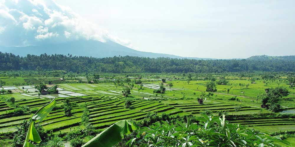 Shows Mount Agung and a row of green rice fields