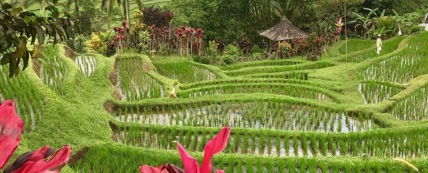 14 Reasons Why You Should Visit Bali - World Travel Toucan