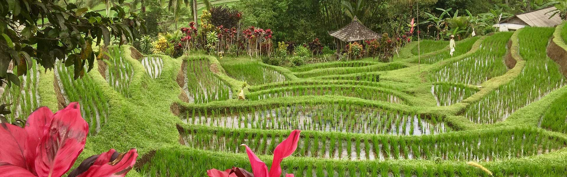 14 reasons why you should visit Bali - our highlights