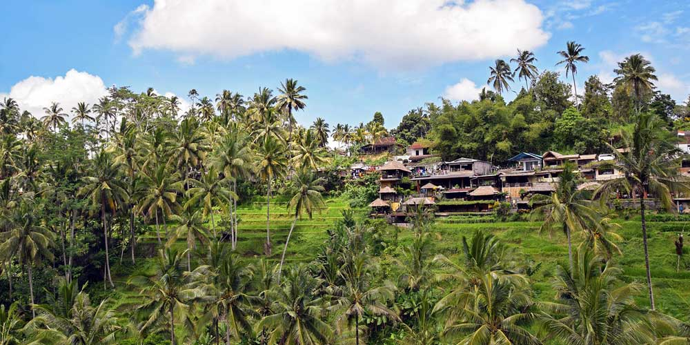 Bali destination guide - Shows the terraces of Ubud in Bali