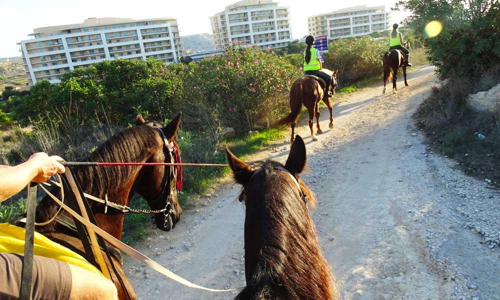 Malta Horse Riding tour - Malta excursions