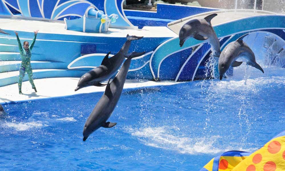 Best Orlando theme parks - Seaworld dolphin show
