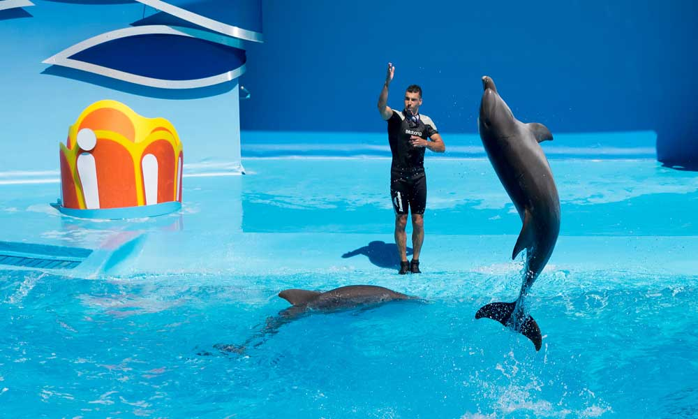 Depicts Dolphin show at Zoomarine Algarve - Things to do in Albufeira