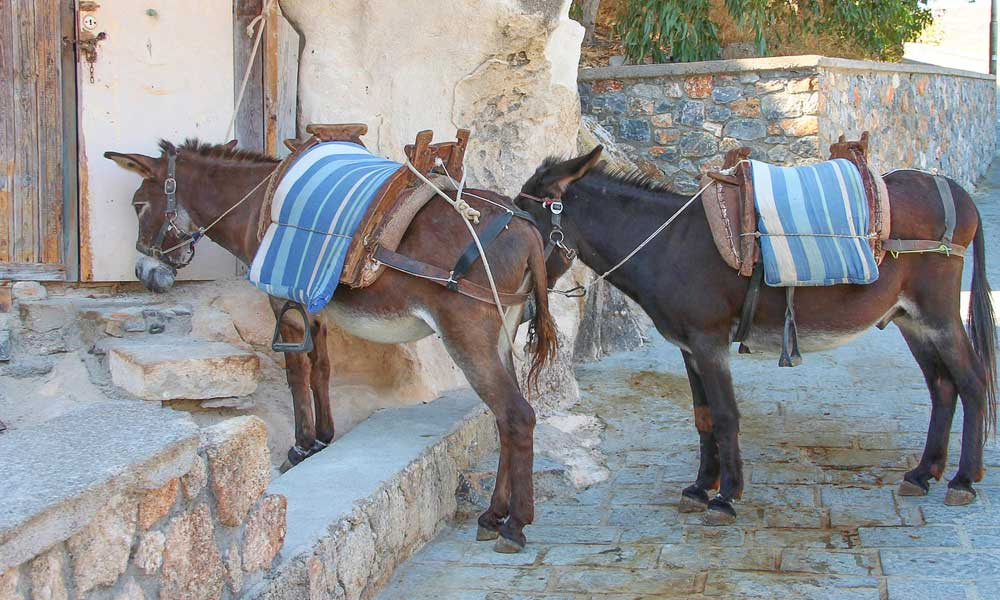 Shows two donkeys in Lindos village - Lindos travel guide
