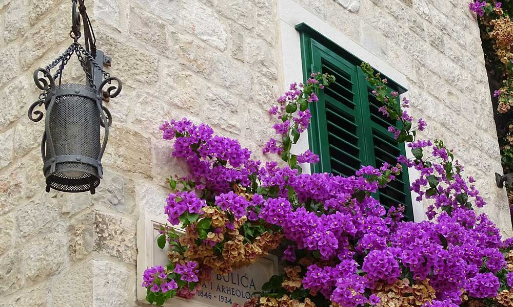 Split accommodation and hotels tips - Shows flowers outside an apartment window