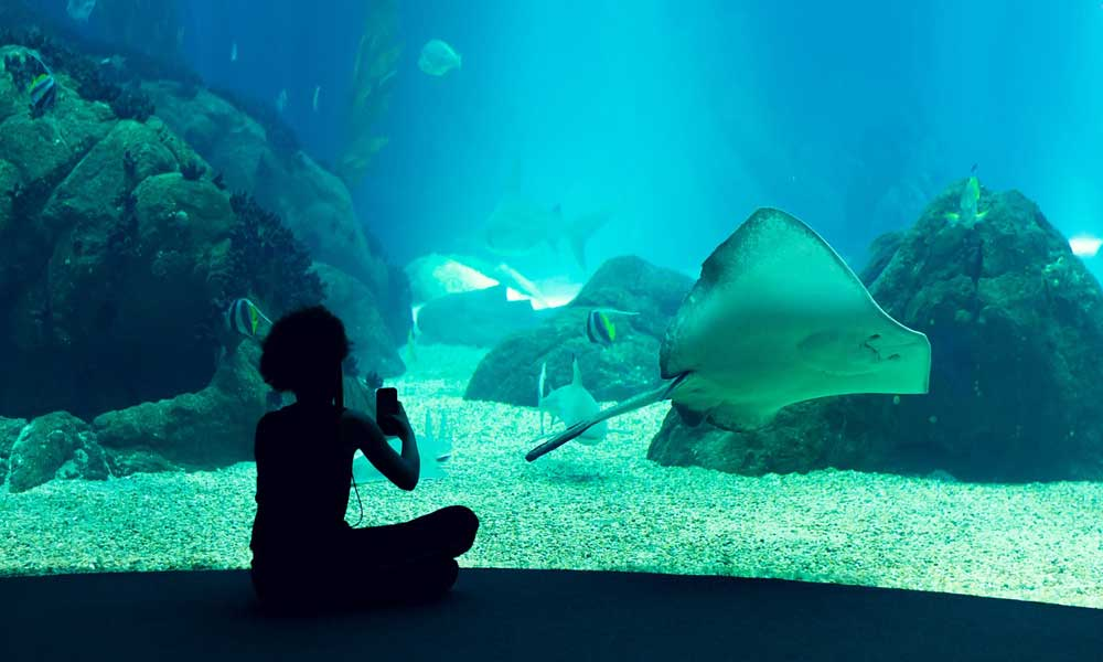 Lisbon attractions - shows spectator and a manta ray at Lisbon Oceanarium