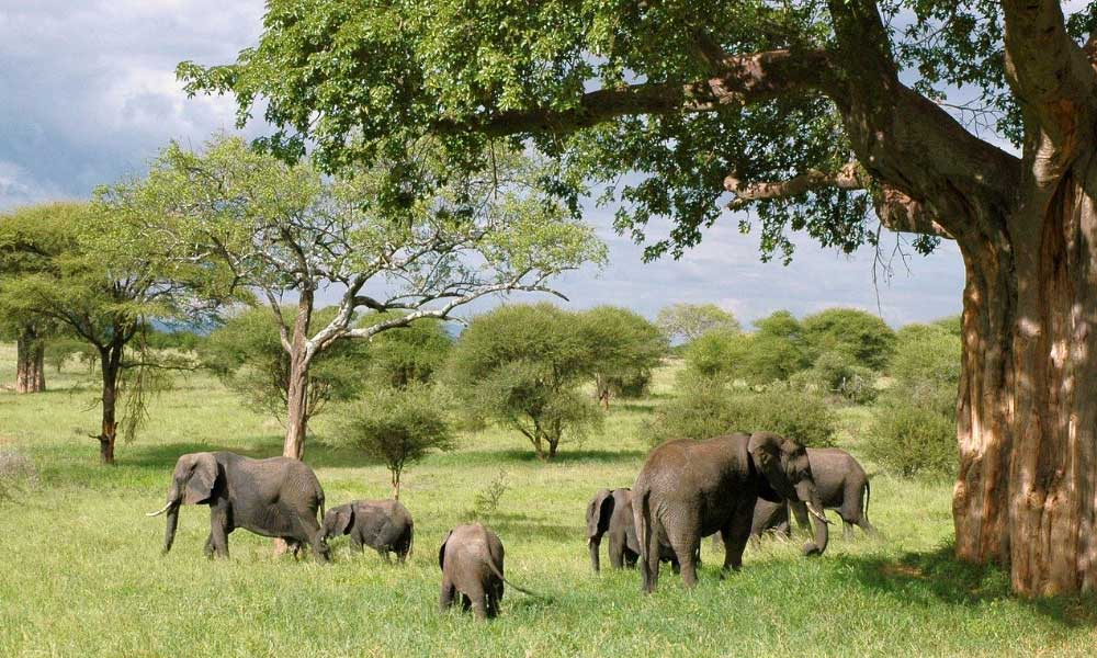 Cheapest countries to visit in Africa - Shows a herd of elephants on the plains