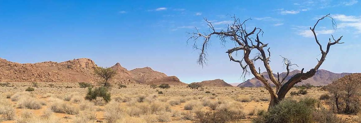Where to go on holiday in 2020 - Shows African wilderness of Namibia