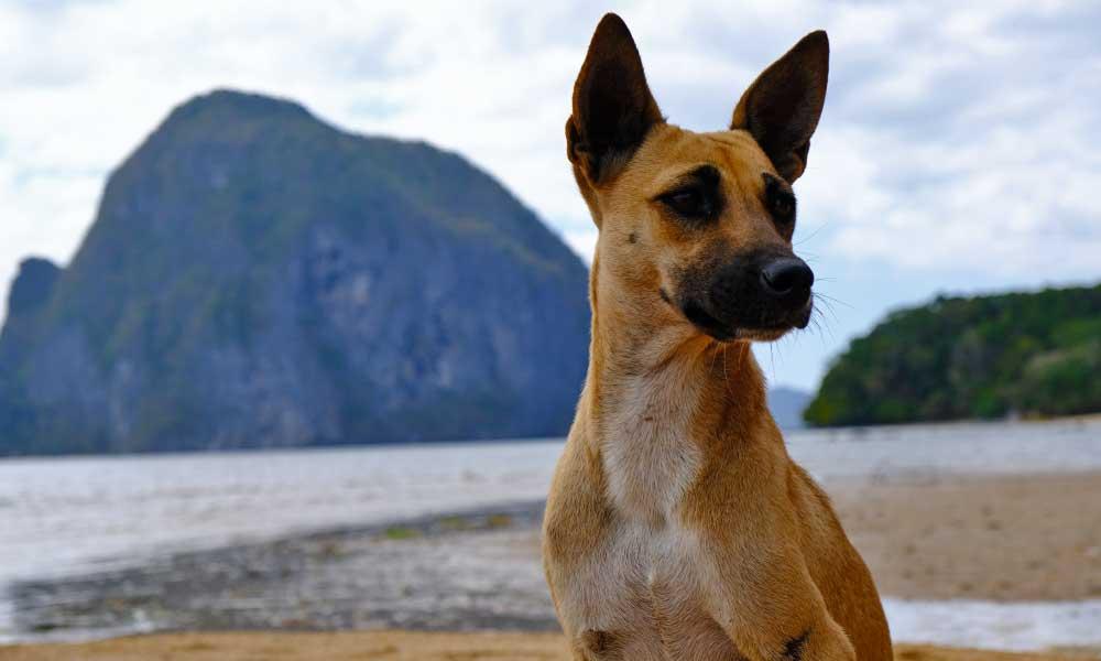 Shows a dog on the beach