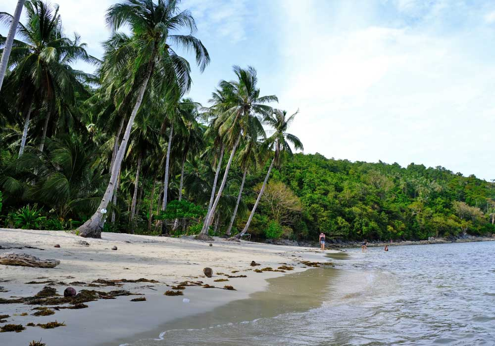 Shows a private island with coconut trees