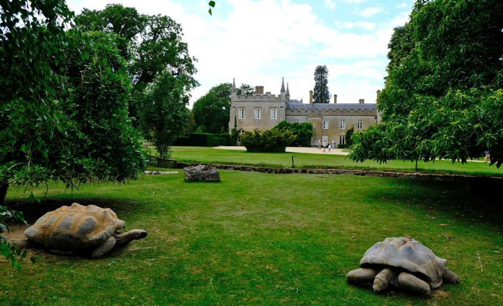 Best attractions in the Cotswolds - Wildlife Park giant turtles