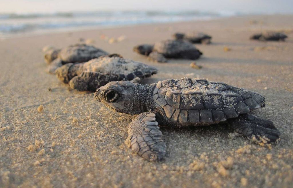 Best things to do in Paphos - Turtles scurrying on a beach