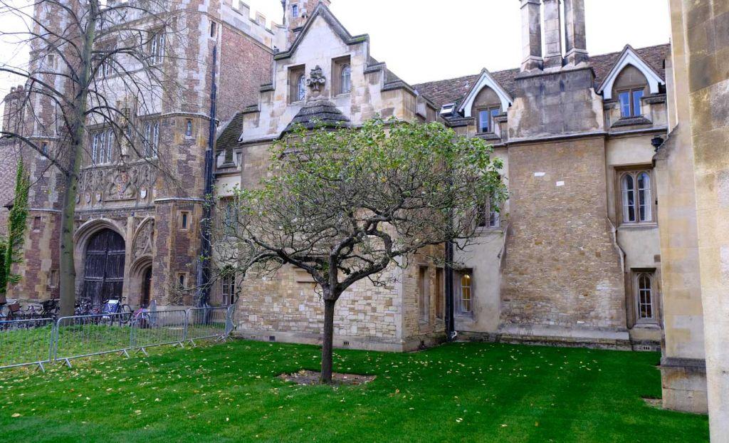 Isaac Newton Apple Tree attraction