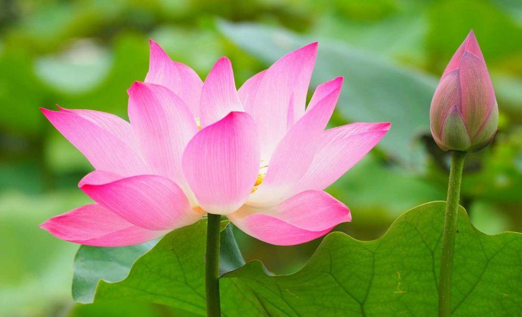 A beautiful plant at Cambridge University Botanical Gardens