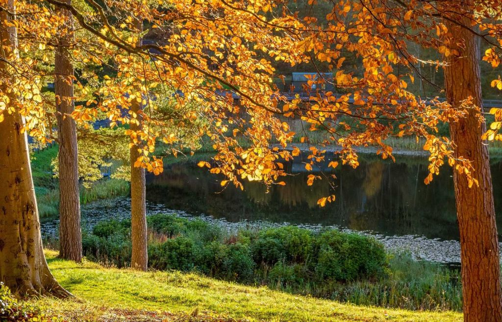 Best places to visit in Northumberland - Wooded area in Corbridge
