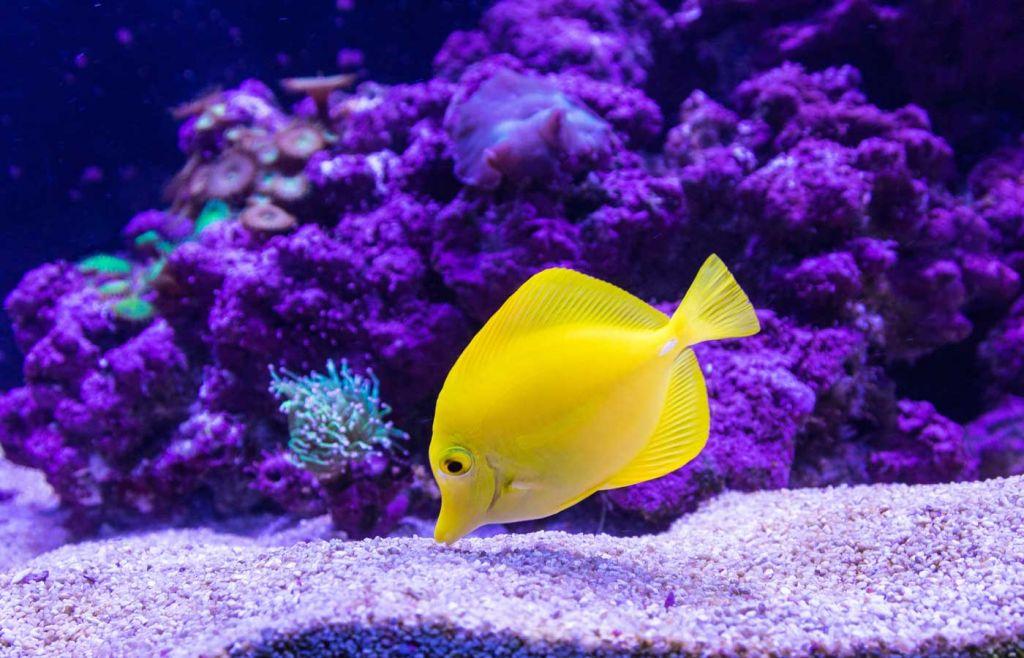 Tropical fish at Aquarium of the Lakes