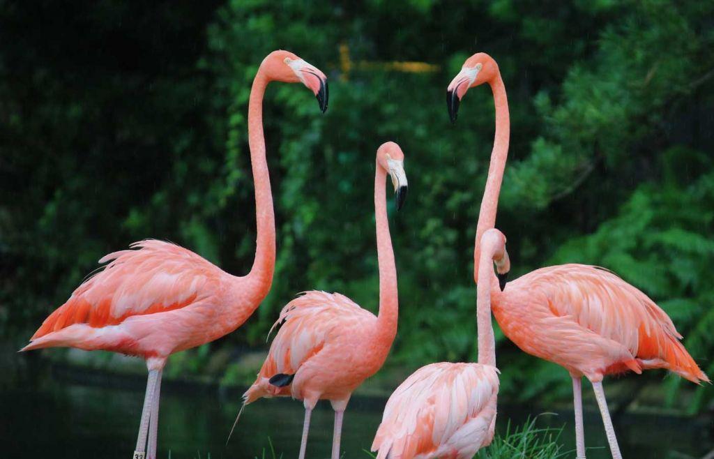 Flamingo's at Lagos Zoo